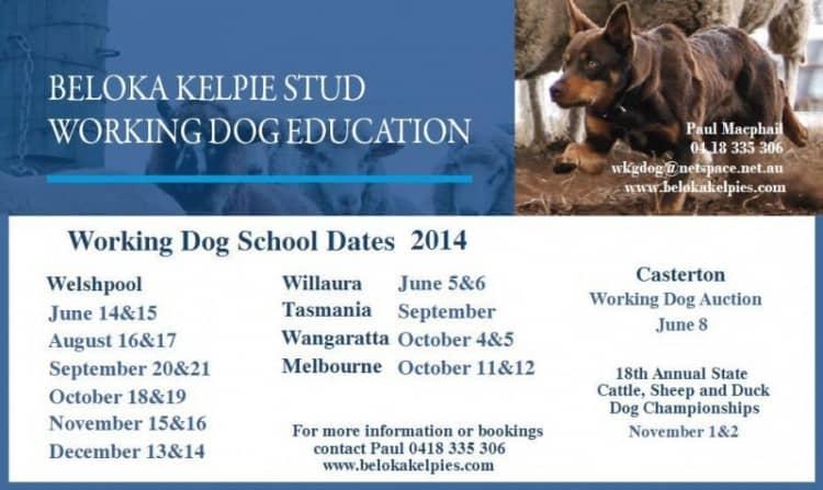 Dog School Dates 2014