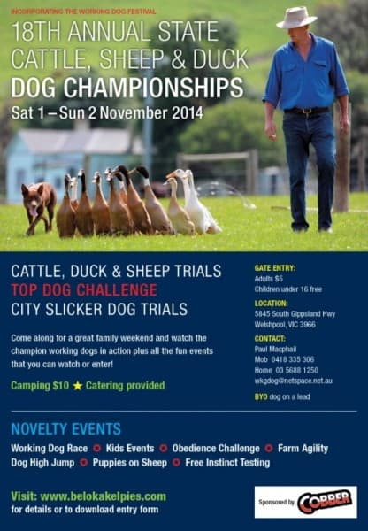 Dog Trials Nov 2014